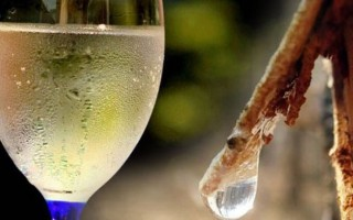 Рецепт приготовления браги из березового сока в домашних условиях