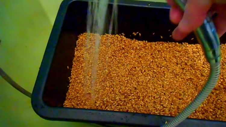 Тщательно промываем ячмень чистой теплой водой