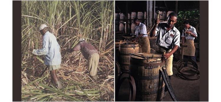 Сельскохозяйственное производство рома