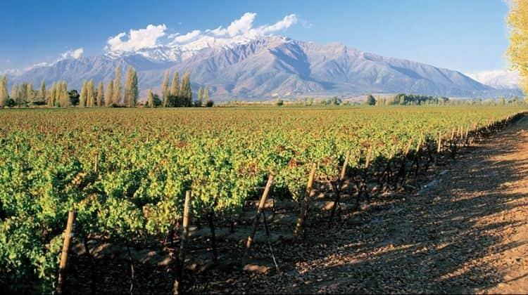 Белое вино Frontera производится из лучших сортов чилийского винограда.