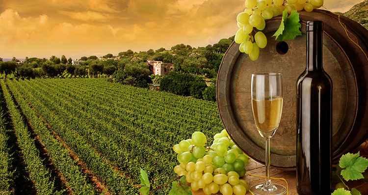 Белое вино технология производства