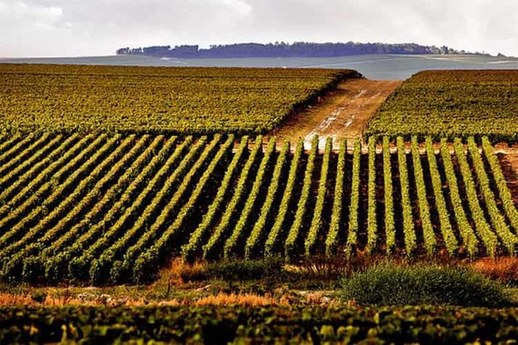 Дорогое игристое вино, как известно, производится только в провинции Шампань.