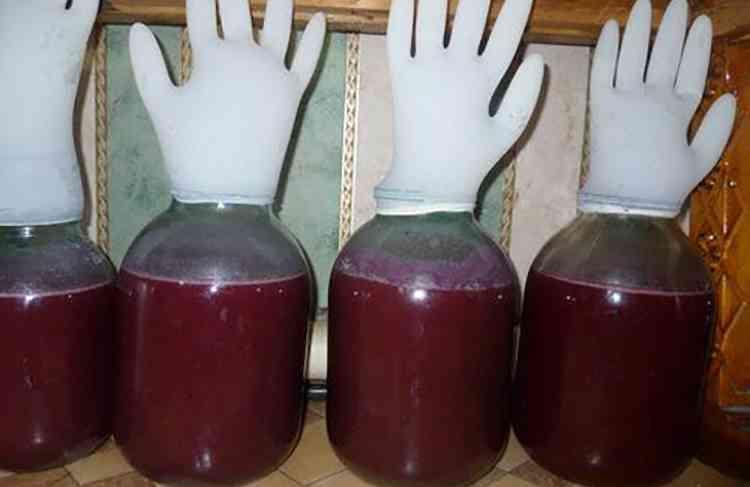 Перчатки на сосуде для брожения