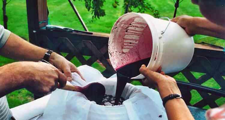 Процеживаем сусло через марлю для вина изабелла