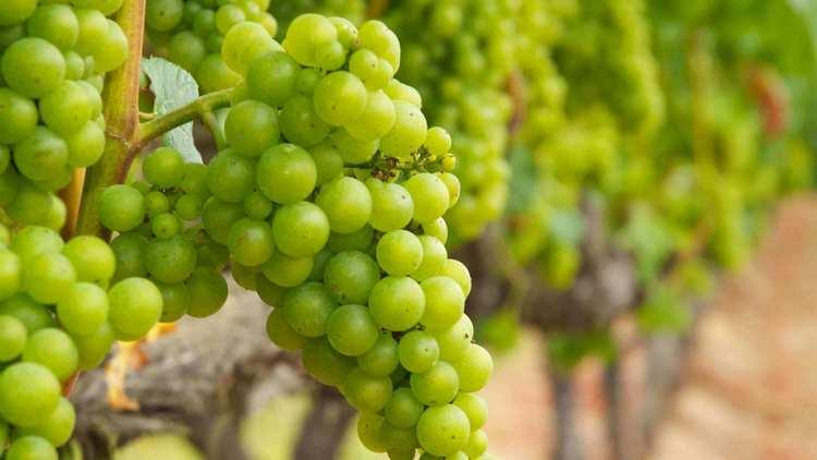 Вино Марсала это продукт Сицилии.
