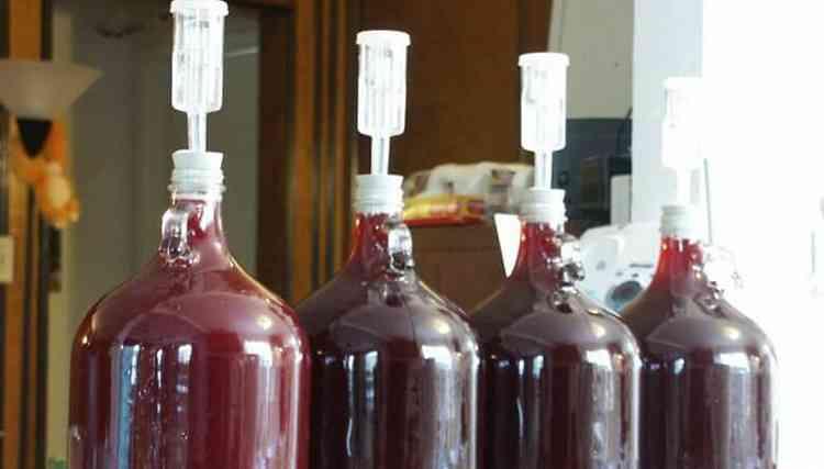 Вино из черники настаиваем закрыв гидрозатвором