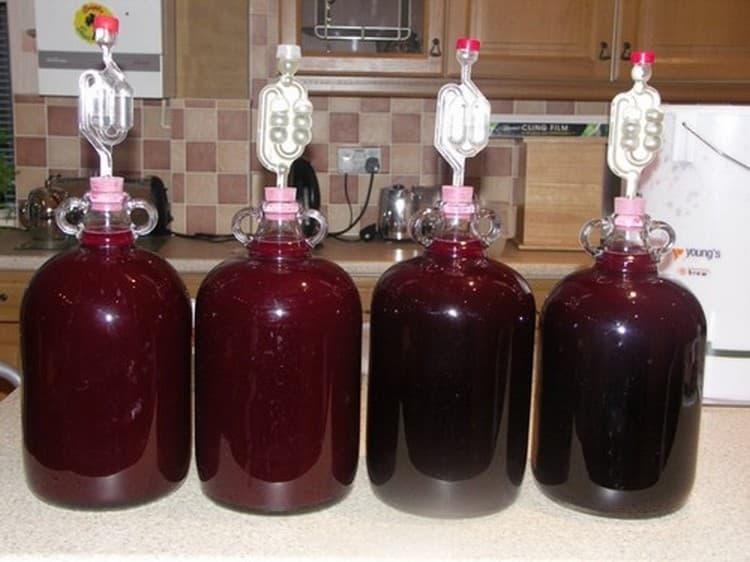 оставляем емкости с вином для брожения, установив гидрозатворы.