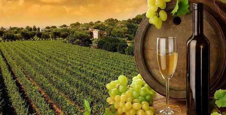 Вино македонии особенность напитка