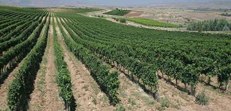 Регионы виноделия македонии