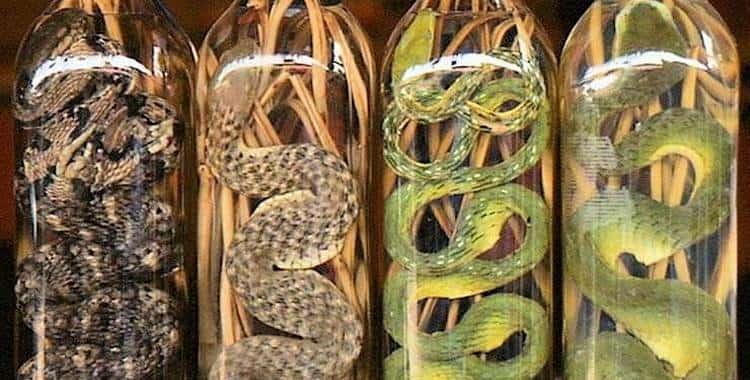 Китайская водка со змеей является очень популярным сувениром.