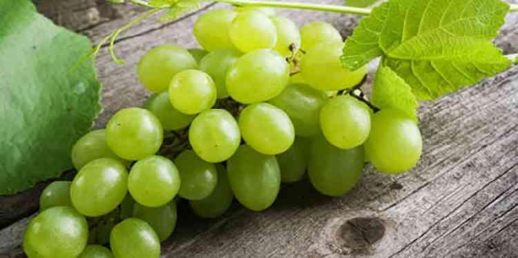 Вино изабелла с зеленого винограда