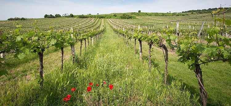 биодинамическое вино начало истории