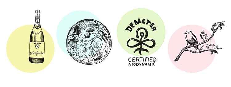 биодинамическое вино сертифицирование