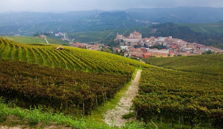 история вина бароло