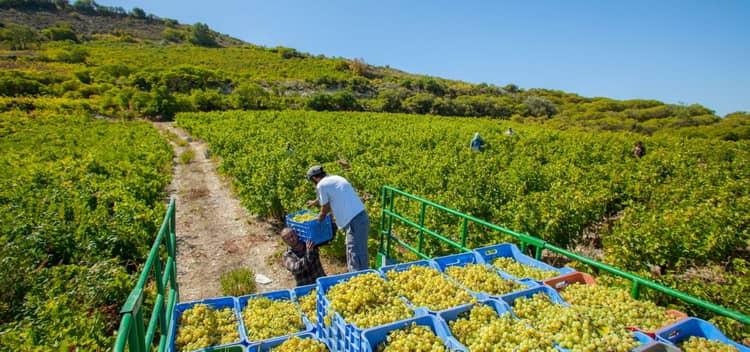 В какие регионах делают вино на кипре