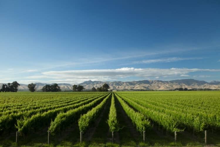 Как подавать новозеландское вино