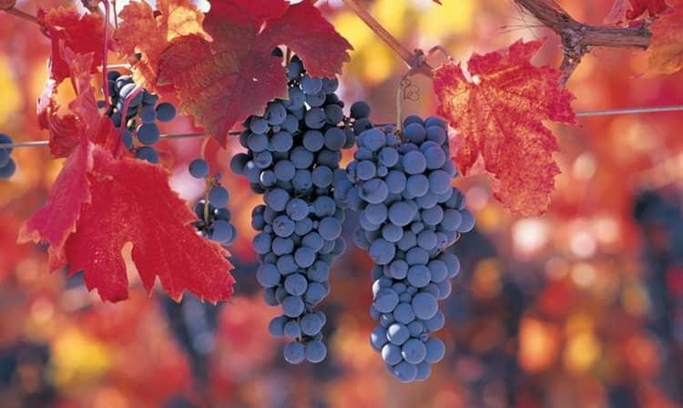Как создавалось вино carmenere inspiration
