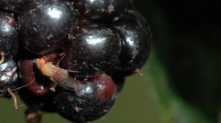 Вино из винограда зауксилось что делать