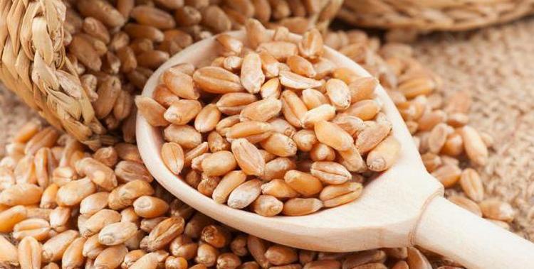 Поговорим о том, как прорастить пшеницу для самогона и как ее правильно выбрать.