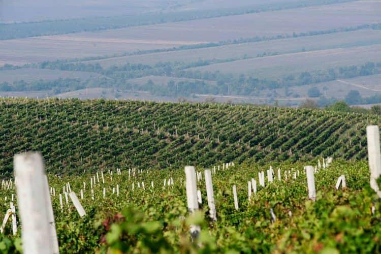 Отличным получается и домашнее молдавское вино.