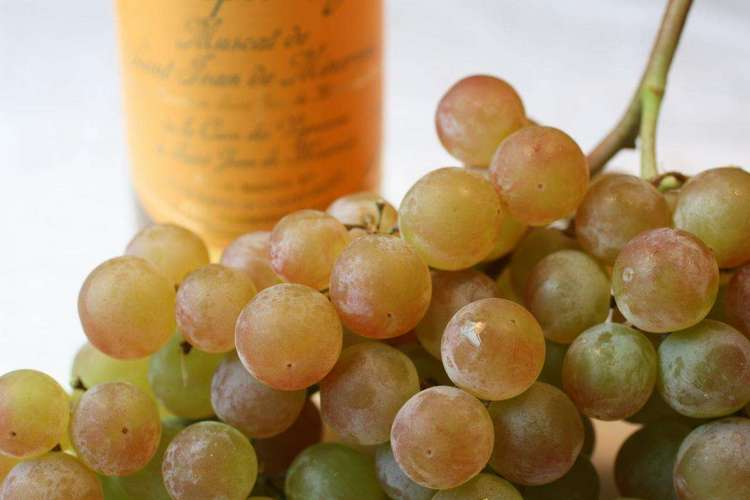 Вино мускат производится из одноименного сорта винограда.