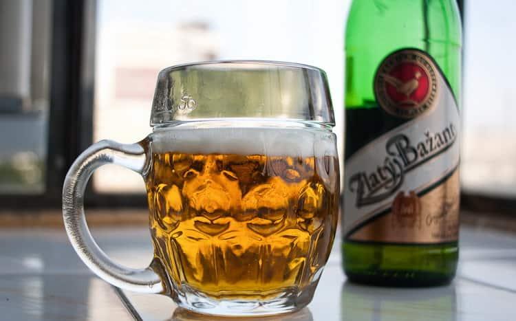 Как пить пиво золотой фазан