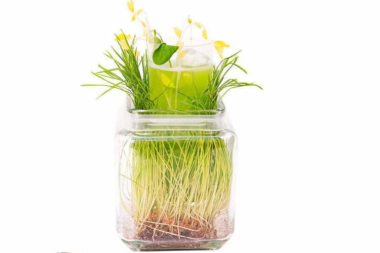 Рецепт «Повелитель растений»