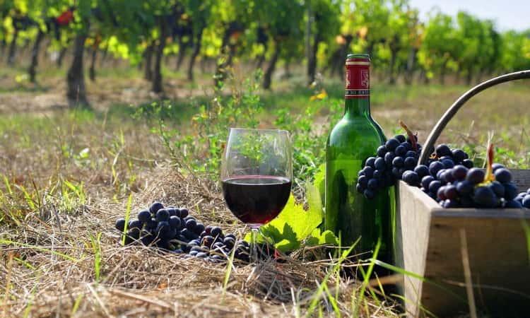 Технологии производства вина