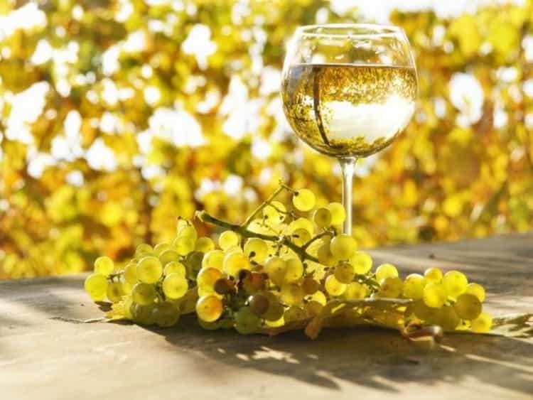 Вино шабли и его особенности