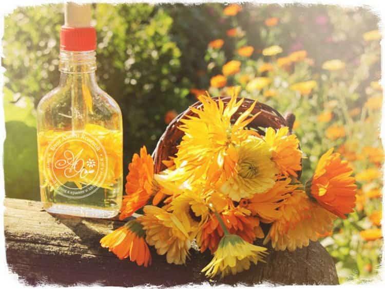 настойка календулы: от чего помогает на спирту