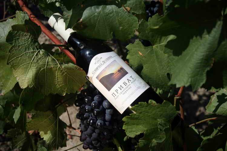 вино мускат солнечная долина